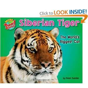 Siberian Tiger The Worlds Biggest Cat (More Supersized