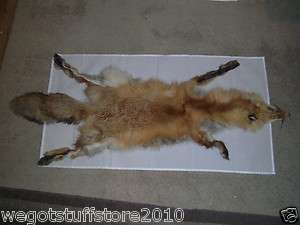 Full Body Pelt Hide Head Tail Taxidermy Tanned Hunting Trapping