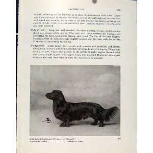 Long Haired Dachshund Fine Art Old Print Dog Hound Pet