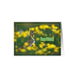 Happy birthday greeting card, bird in grass and yellow